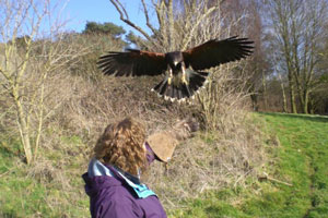 Picture of Falconry experience day