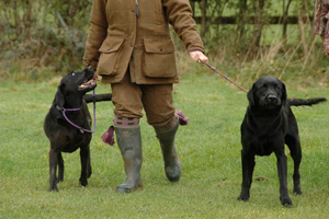 Picture of Gun Dog training